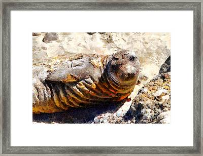 Young Elephant Seal  . 7d16091 Framed Print by Wingsdomain Art and Photography