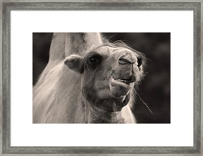 You're Ugly But You Intrigue Me Framed Print by Barbara  White