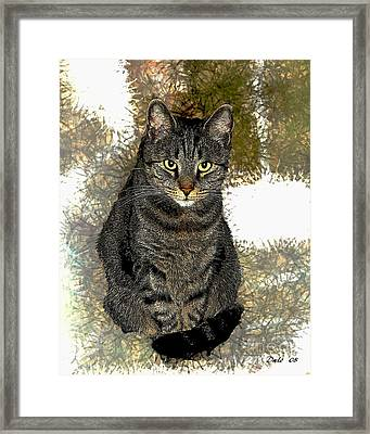Zachary Framed Print by Dale   Ford