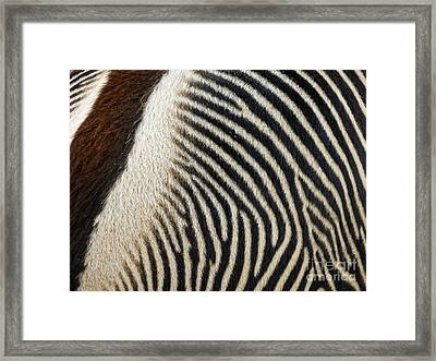 Zebra Caboose Framed Print by Methune Hively