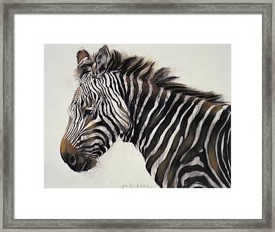 Zebra  Framed Print by Odile Kidd