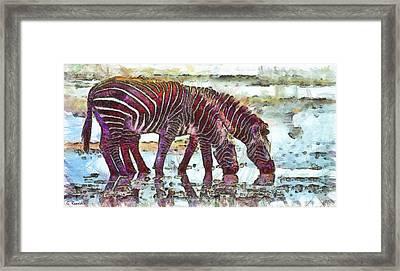 Zebras Framed Print by George Rossidis