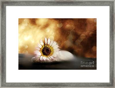 ZEN Framed Print by VIAINA Visual Artist