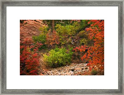 Zion Fall Colors Framed Print by Dave Dilli