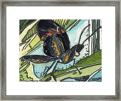 Zippy The Butterfly Framed Print by Mindy Newman