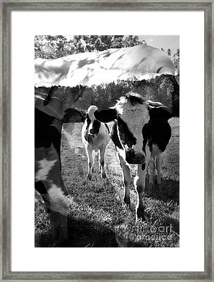Zoey And Matilda In The Blissful Sun Framed Print by Danielle Summa