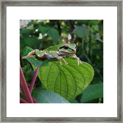 . . Just Chilling . . Framed Print by I'ina Van Lawick