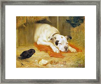 A Bone Of Contention Framed Print by Herbert William
