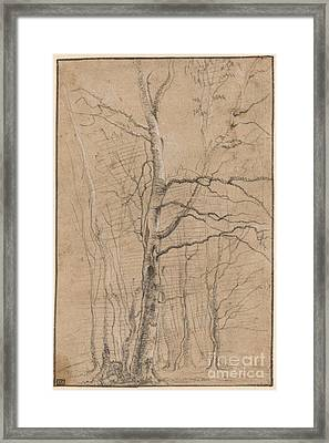 A Copse Of Birches In Winter Framed Print by MotionAge Designs
