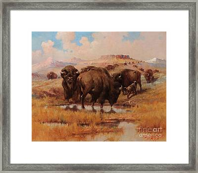 Buffalo At A Watering Hole Framed Print by Celestial Images