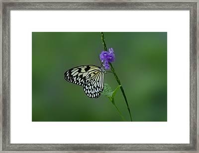 Butterfly On Flower  Framed Print by Sandy Keeton