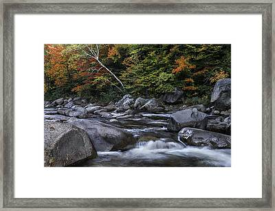 Dreaming In Color Framed Print by Thomas Schoeller