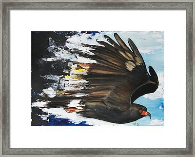 Everglades Snail Kite Framed Print by Anthony Burks Sr
