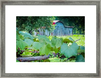 Fields Of Green Framed Print by Karen Wiles