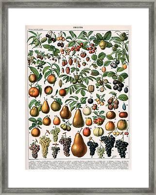 Illustration Of Fruit Varieties Framed Print by Alillot