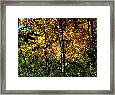 Michigan Fall Colors 2  Framed Print by Scott Hovind