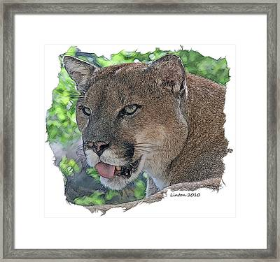 Panther 2 Framed Print by Larry Linton