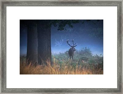 Richmond Park Stag Framed Print by Ian Hufton