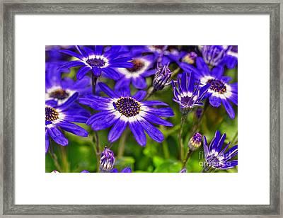 Senetti Flower Framed Print by Igor Aleynikov