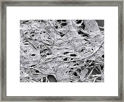 1-ply Toilet Paper, Sem Framed Print by Scimat