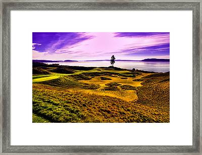 #15 At Chambers Bay Golf Course Framed Print by David Patterson