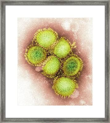 2009 H1n1 Swine Flu Virus, Tem Framed Print by Cdc