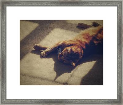 Afternoon Nap Framed Print by Amy Tyler