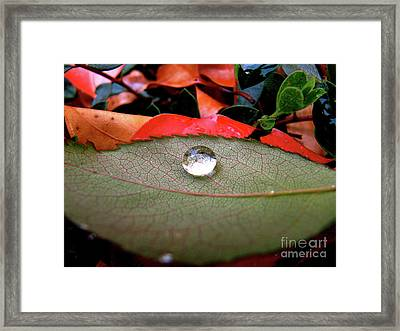 All Aboard Framed Print by CML Brown
