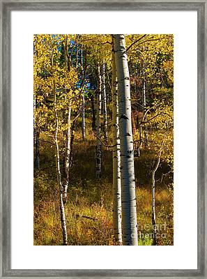 All That Is Gold Framed Print by Mike Dawson