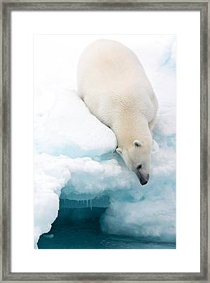 Arctic Composition Framed Print by Marco Gaiotti