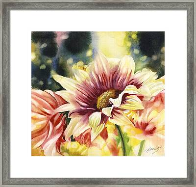 Autumn Chrysanthemum Framed Print by Alfred Ng