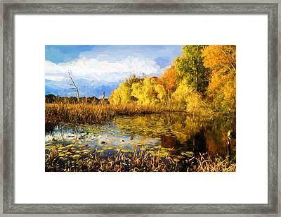Autumn Colors Framed Print by Lilia D