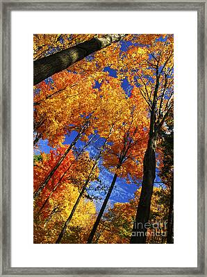 Autumn Forest Framed Print by Elena Elisseeva