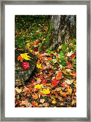 Autumn Monongahela National Forest Framed Print by Thomas R Fletcher