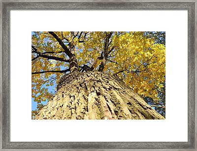 Autumn Tree Framed Print by Andrew Dinh