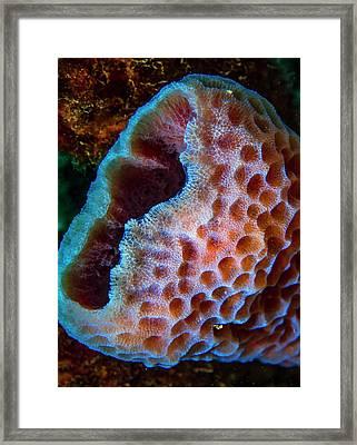 Azure Vase Sponge Framed Print by Jean Noren