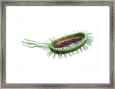 Bacteria Cross Section Framed Print by Science Picture Co