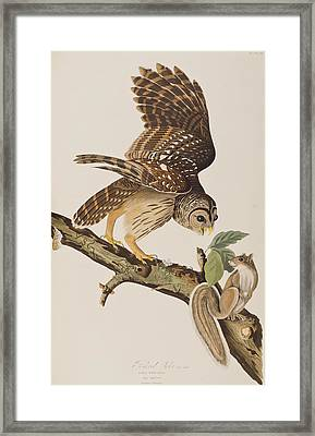 Barred Owl Framed Print by John James Audubon