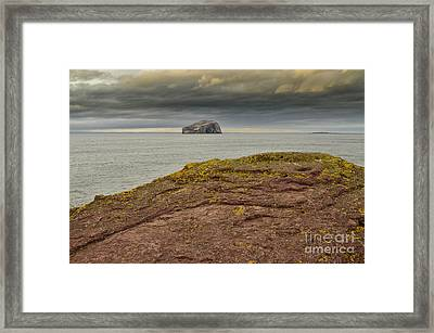 Bass Rock Framed Print by Stephen Smith