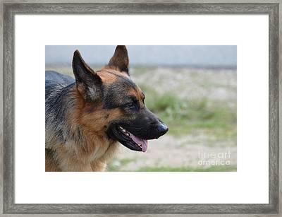 Beautiful Profile Of A German Shepherd Dog Framed Print by DejaVu Designs