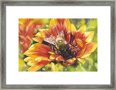 Bee In A Blanket Framed Print by Alfred Ng