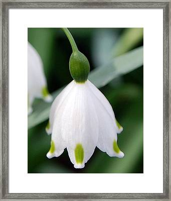 Bell Flower Framed Print by Amy Fose