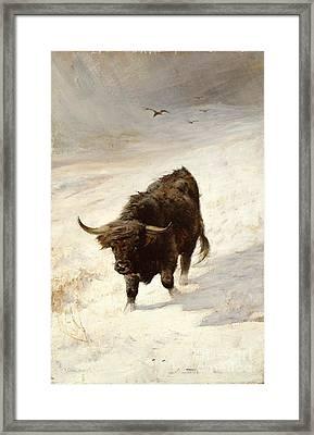 Black Beast Wanderer Framed Print by Joseph Denovan Adam