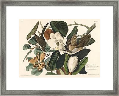 Black-billed Cuckoo Framed Print by John James Audubon