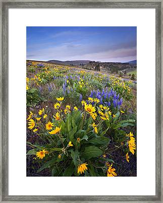 Blue And Gold Framed Print by Mike  Dawson