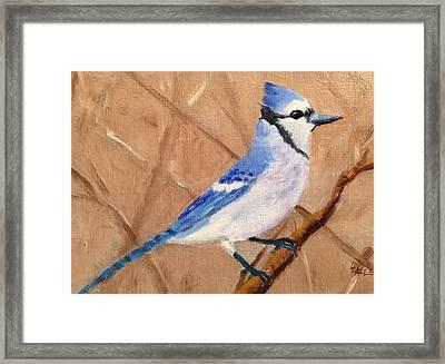 Blue Jay Framed Print by Linda Hiller