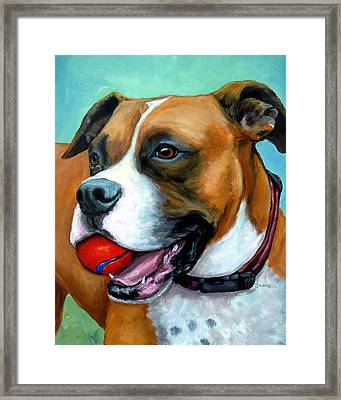 Boxer With Red Ball Framed Print by Dottie Dracos