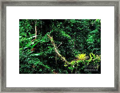 Bromeliads El Yunque National Forest Framed Print by Thomas R Fletcher