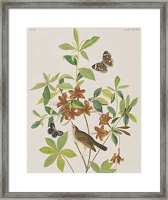 Brown Headed Worm Eating Warbler Framed Print by John James Audubon