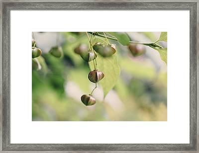 Buds Framed Print by Cindy Grundsten